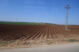 Palestinian Agriculture