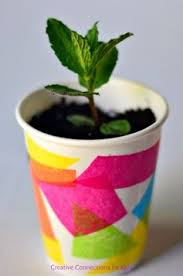 plant seed in cup