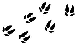 donkey-footprints